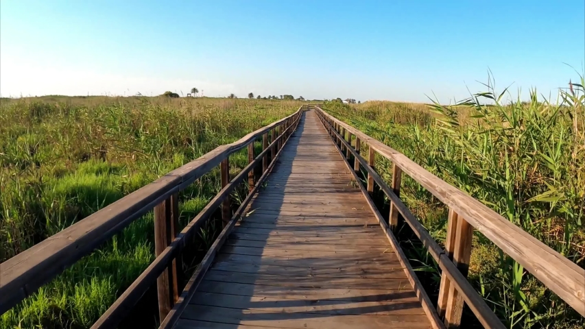 Boardwalk walkway of wood amidst vegetation. Wooden path surrounded by sugar cane or canes in Los Narejos Beach, Murcia, Spain.