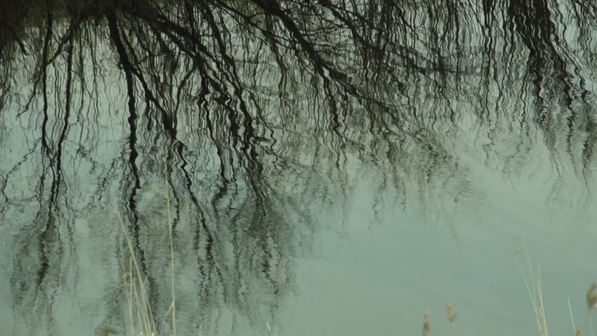Close-up of Water. Narrow Riverbank. Little Water Waves. Reflections Of Trees Without Leaves. Fall. Depression. Darkness. Cold water. Bad weather in November. Nature Prepares for Winter. First Frosts   Shutterstock HD Video #1054730990