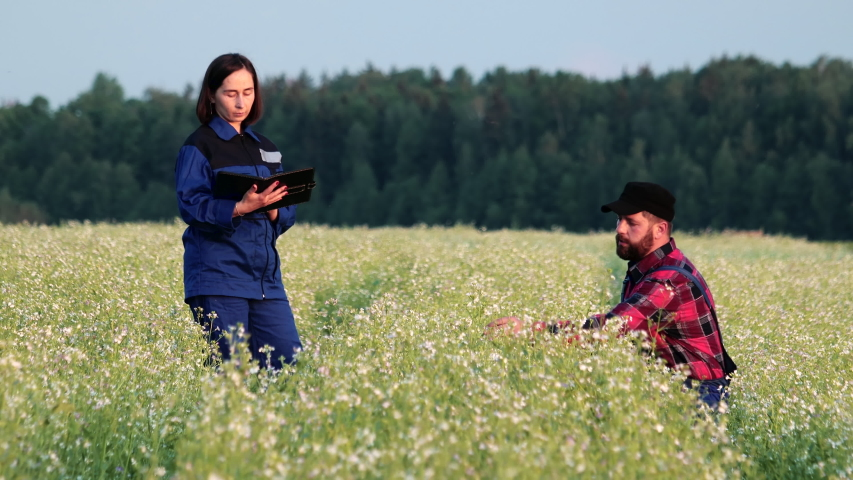 Agronomist and a farmer check the growth of a field with buckwheat flowers. Man and woman in uniform measure plant shoots with a tape measure and enter data into a digital tablet. Modern agribusiness | Shutterstock HD Video #1054731191