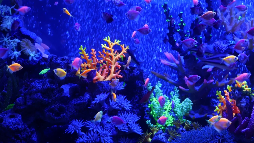 Colorful vivid fishes glow, violet aquarium under ultraviolet uv light. Purple fluorescent tropical aquatic paradise exotic background, luminous shiny ecosystem, vibrant fantasy decorative neon tank. | Shutterstock HD Video #1054731860