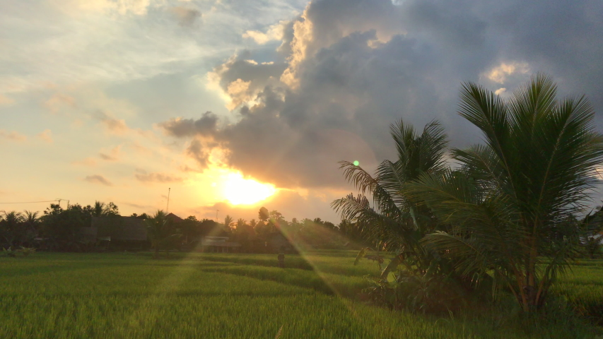Beautiful sunset on an amazing green rice field. Shot on a phone