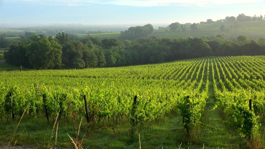 Sunset landscape and fog, Bordeaux wineyard, Langoiran | Shutterstock HD Video #1054732955