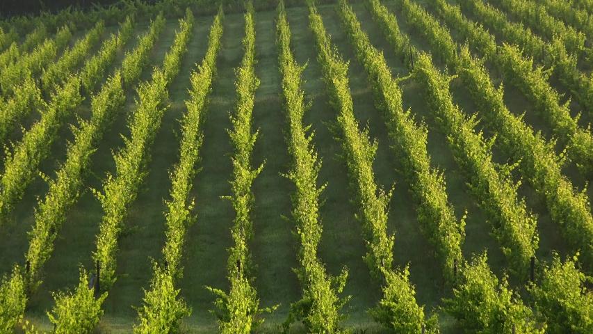 Sunset landscape, Bordeaux wineyard, Langoiran | Shutterstock HD Video #1054732958