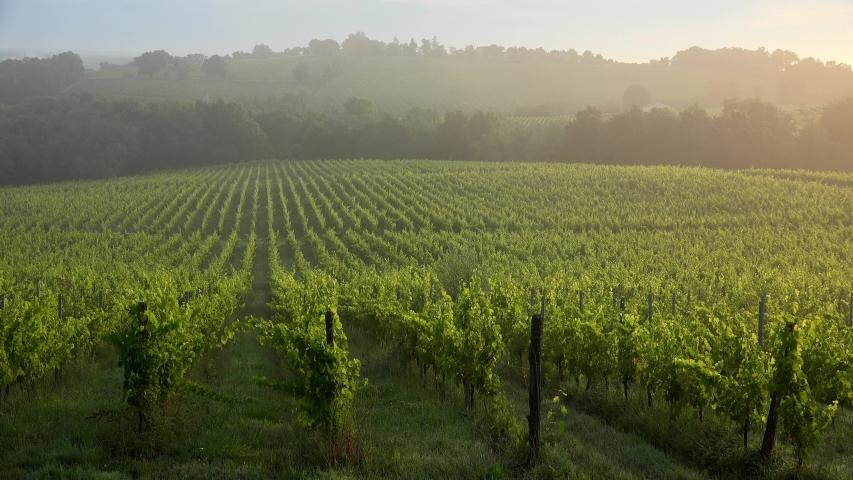 Sunset landscape and fog, Bordeaux wineyard, Langoiran | Shutterstock HD Video #1054732961