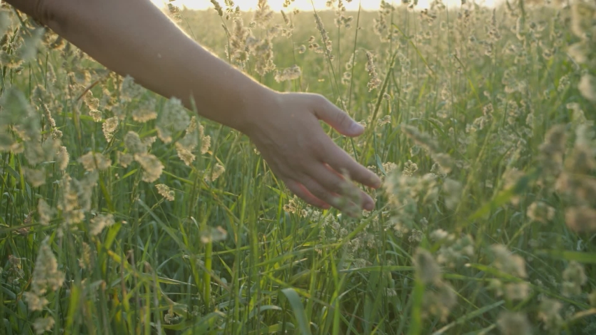 The girl walks through the meadow in thick high grass and her hand touches the tops of the ears in the rays of the sunset in slow motion