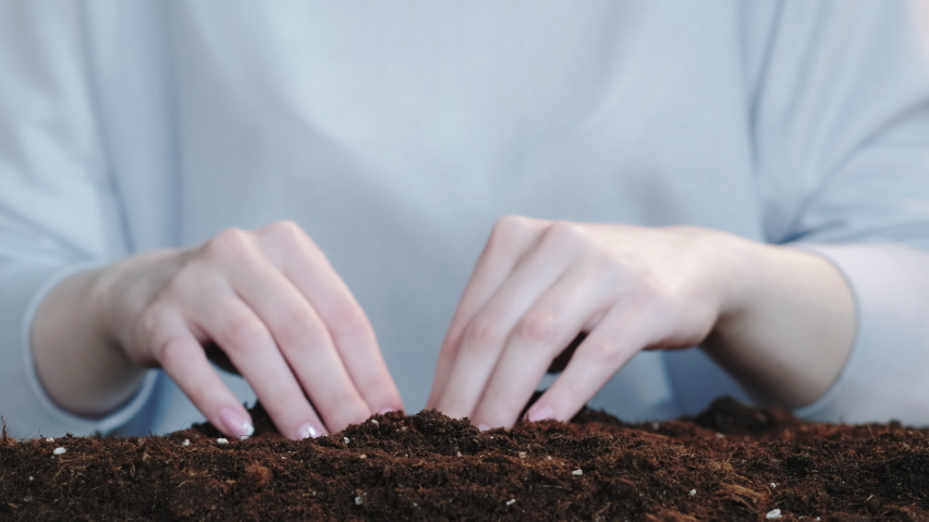 Money growing. Deposit interest. Female hands gathering coin crops from fertile soil on blur background.   Shutterstock HD Video #1054733891