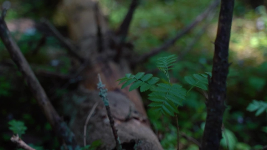 Close up of fallen tree trunk on forest .  Dead tree in forest.