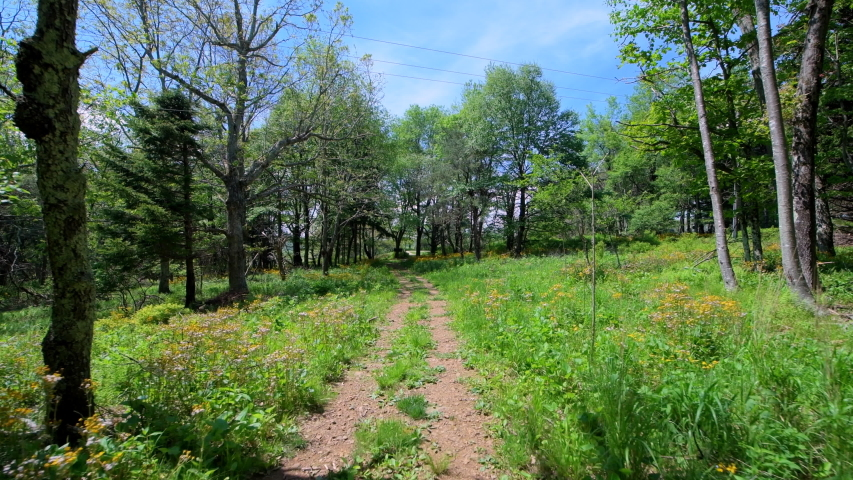 Story of the Forest nature trail in Shenandoah Blue Ridge appalachian mountains with yellow flowers on path meadow wide angle handheld pov walking | Shutterstock HD Video #1054744196