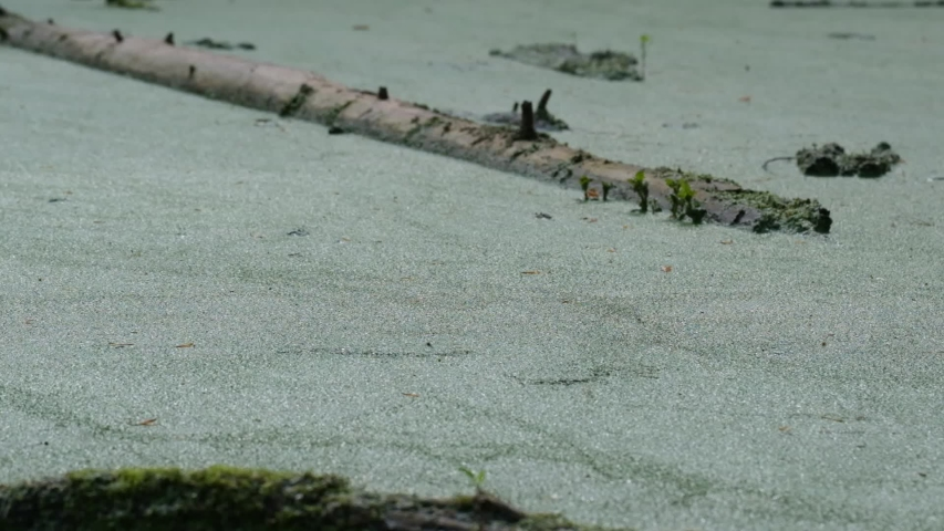 River water covered with green algae splashing in slow motion   Shutterstock HD Video #1054751858