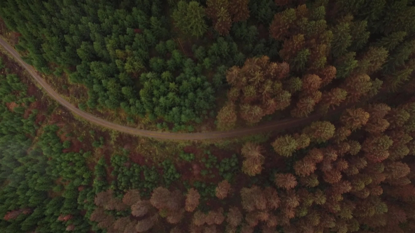 Climate change at german woods Royalty-Free Stock Footage #1054756844