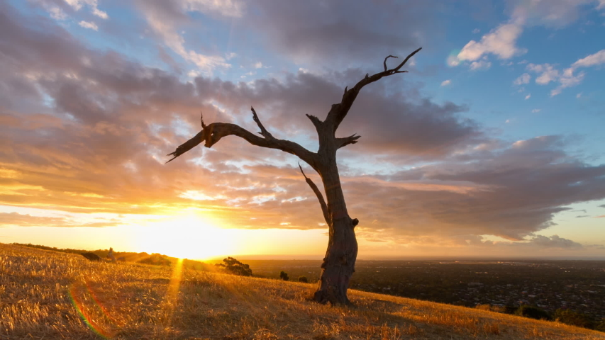 Colourful sunset clouds in time lapse race over an old hillside tree above suburbia in Adelaide, South Australia