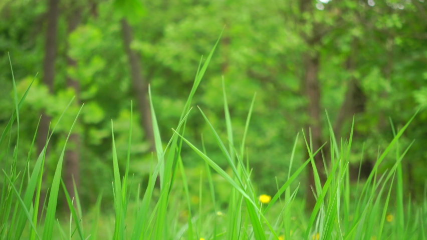 Green grass on a wind, with voices of birds. Beautiful forest. | Shutterstock HD Video #1054772537