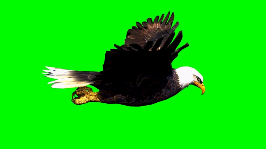 Bald eagle flying in slow motion - separated on green screen.