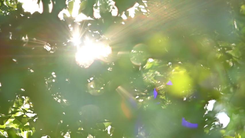 Sun light shine through green tree in the morning day | Shutterstock HD Video #1054777583