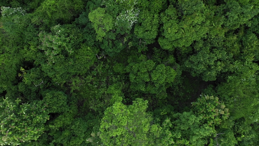 an aerial footage of rainforest from above Royalty-Free Stock Footage #1054874573