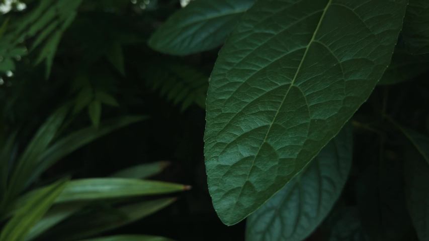 Close up Green Leaf in The Park with Breeze.   Shutterstock HD Video #1054905152