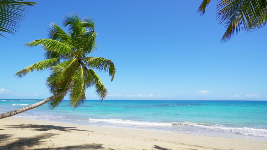 Summer landscape on the beach. Palm tree and blue sea and clear sand beach in sunny day. Tropical vacation. Natural beach background.   Shutterstock HD Video #1054931924