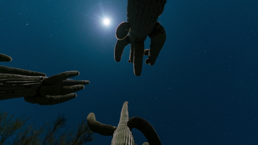 Time lapse low angle tracking shot of moon through Saguaro cacti in Sonoran Desert, Arizona
