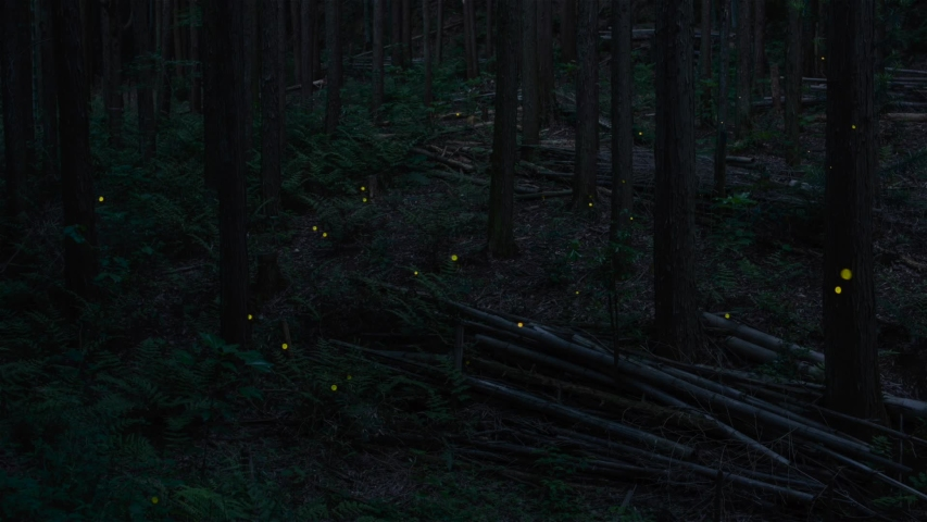 Firefly are a Japanese summer tradition. | Shutterstock HD Video #1055097608