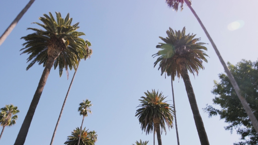 Looking up at Palm Trees Against a Clear, Blue Sky. Captured with a Gimbal in 4k resolution. Location: N Bedford Drive, Beverly Hills, Los Angeles, California, United States.   Royalty-Free Stock Footage #1055108345
