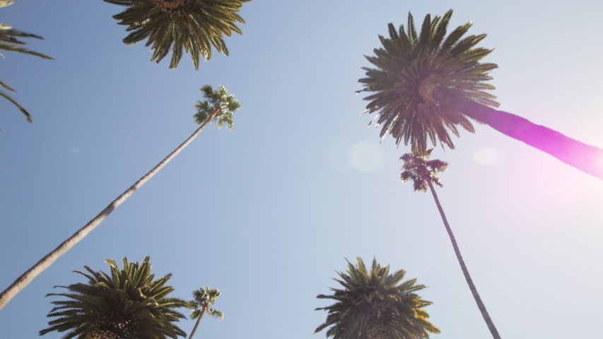Driving on a Street Lined with Palm Trees. Slow Motion, Looking Up, Gimbal. Captured on a sunny day in Beverly Hills, California in 59.94 fps. Location: N Bedford Drive, Los Angeles, CA, United States | Shutterstock HD Video #1055114492