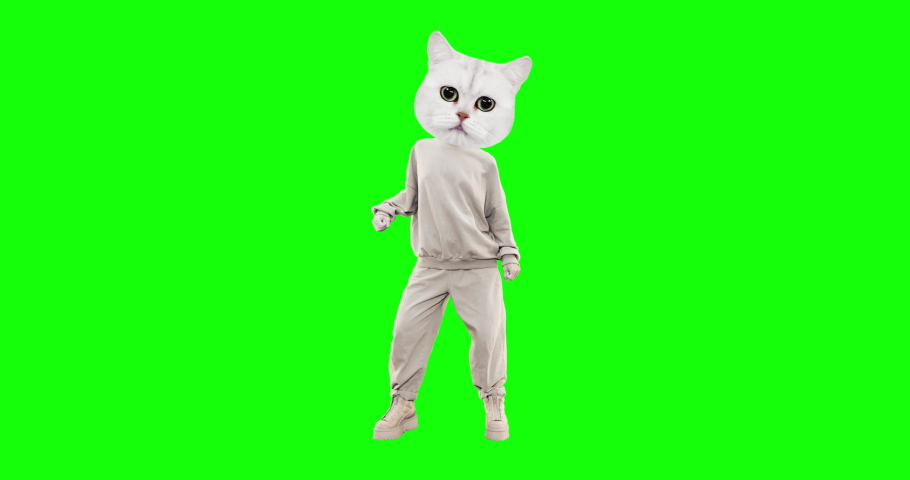Stop motion funny Cat with different emotions on chroma key background. Kitty dancing power. Ideal for advertising and presentations Royalty-Free Stock Footage #1055114573