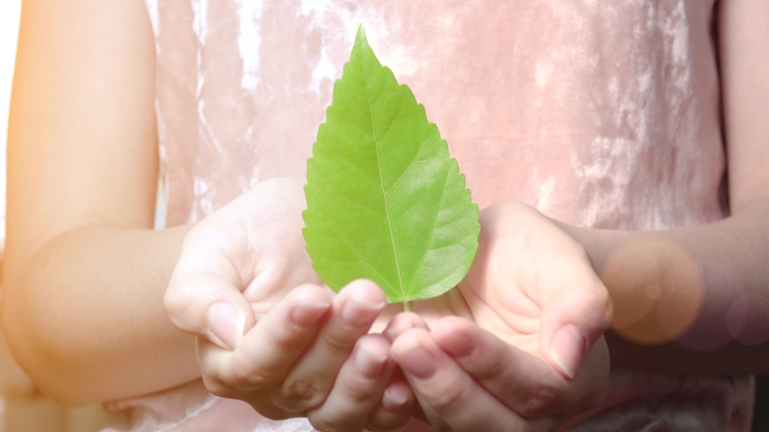 Hands of child holding green leaf. Concept of growing, environment protection and life. | Shutterstock HD Video #1055121395