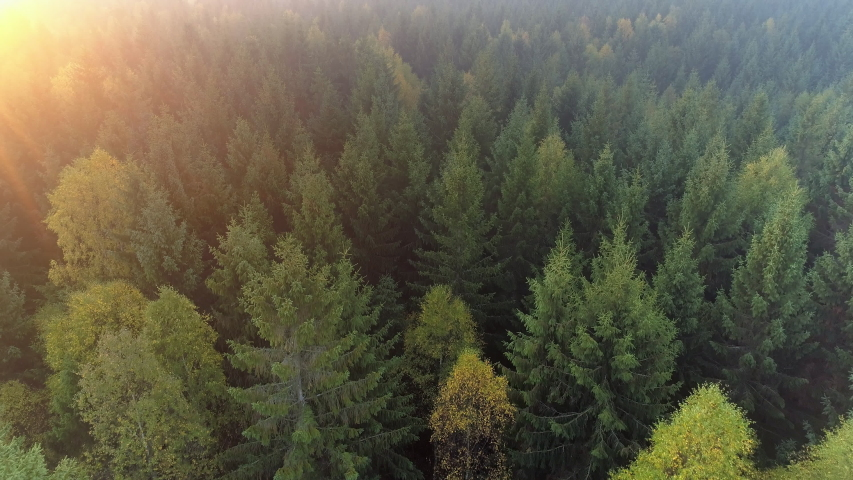 Aerial view of forest in Sweden at sunrise. Drone shot flying over spruce conifer treetops, nature background footage in 4K resolution Royalty-Free Stock Footage #1055123378