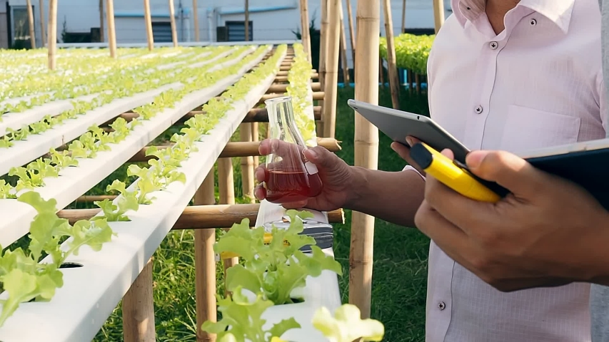 Smart agriculture technology concept - Farmers monitoring organic hydroponic green oak in plant nursery farm. Smart agriculture technology. | Shutterstock HD Video #1055135594