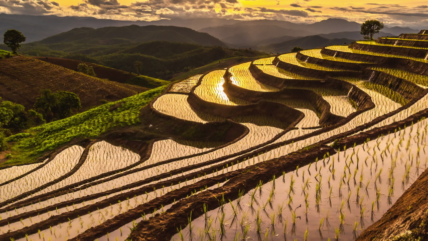 Zoom out Time lapse of beautiful scenery of Pa Pong Peang rice terrace in sunset at Pa Bong Piang, Chiang Mai in Thailand