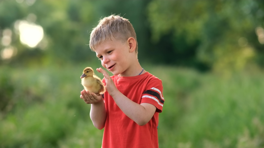 A little boy holds a small baby duck on a green lawn.