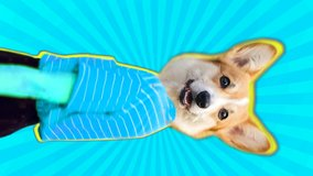 Vertical animation of corgi dog head dancing body. Bright pop colors make this trendy video.