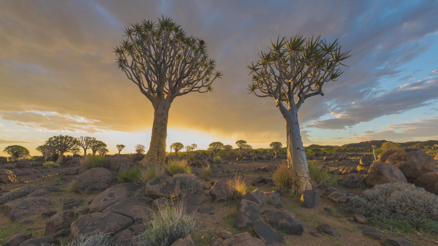 4K, 10BIT, YUV422 timelapse of colorful burning clouds and rain over Quiver tree in sunset,Namibia,Africa