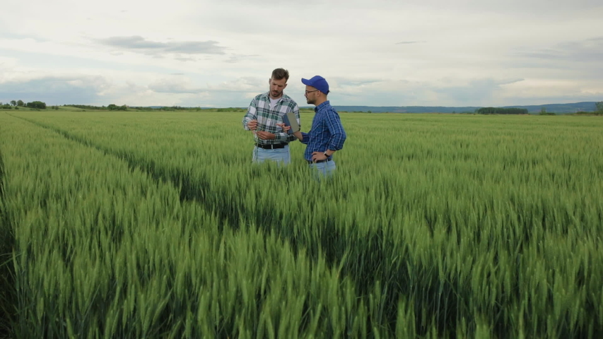 Two farmers standing in green wheat field examining crop during the cloudy day. | Shutterstock HD Video #1055277155