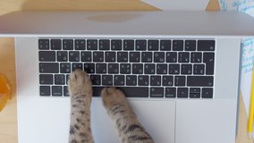 Funny and silly playful video of cat paws typing and pressing buttons on laptop keyboard. Cute and fluffy cat paws, Concept joke or freelance work in office, pet life and routine workplace