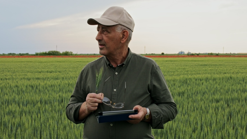 Senior farmer standing in wheat field holding tablet and examining crop during the day. | Shutterstock HD Video #1055315900