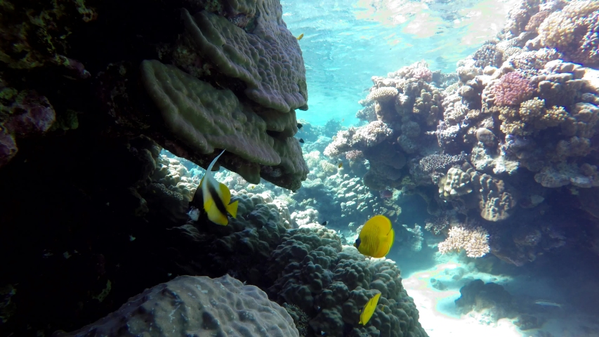 Life in the ocean. Tropical fish and coral reefs. Beautiful corals. | Shutterstock HD Video #1055322128