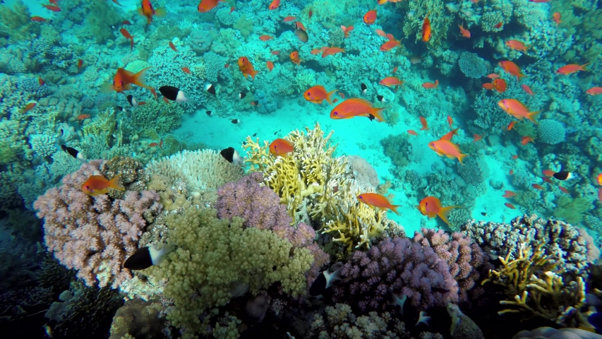 The marine life of tropical fish. Coral reef. Tropical sea and coral reef. | Shutterstock HD Video #1055322146