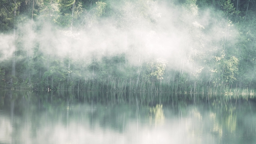 Spring in all its glory! Beautiful river with forest banks and birch trees in fresh foliage. Fog crawls over water as band, brilliant haze in sunlight, reflection in calm water, game fish | Shutterstock HD Video #1055324528