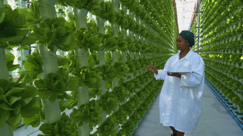 Zoom out view of a black African female farmer in white coat holding a digital tablet collecting research data for analysis and programming of irrigation in a hydroponic farm.  Royalty-Free Stock Footage #1055330783