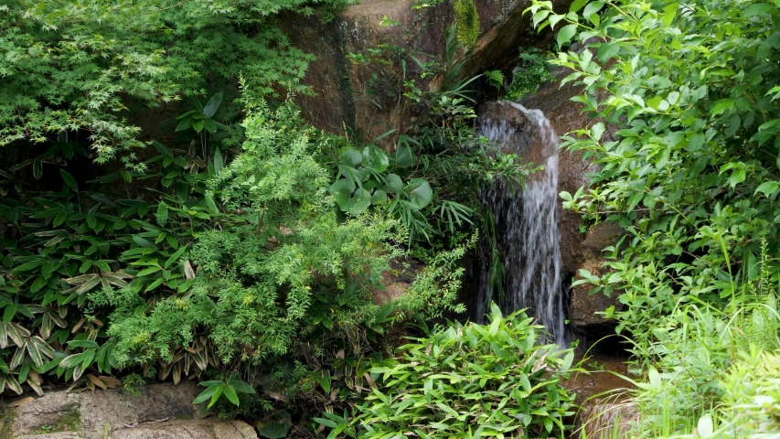 Water flowing from a small waterfall in the forest Summer | Shutterstock HD Video #1055347904