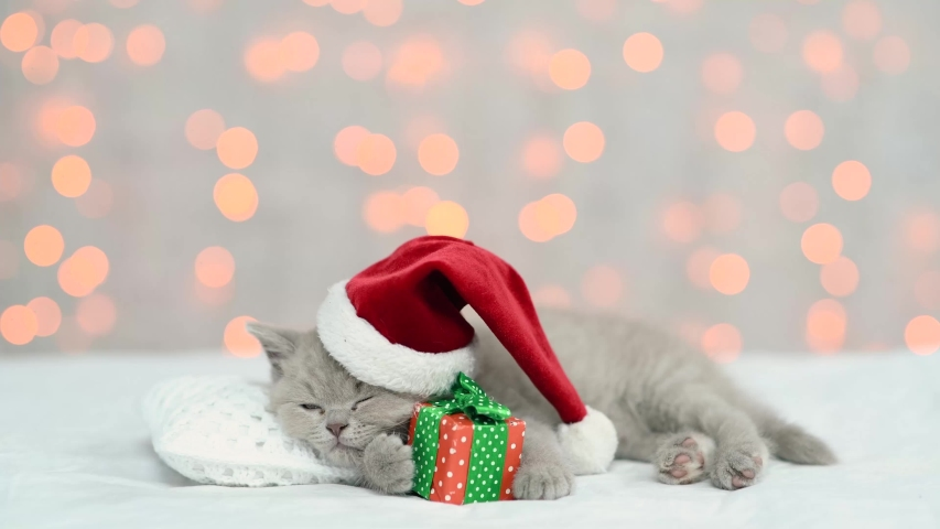 Baby kitten wearing red christmas hat sleeps on a pillow with gift box on festive background. Empty space for text | Shutterstock HD Video #1055351411