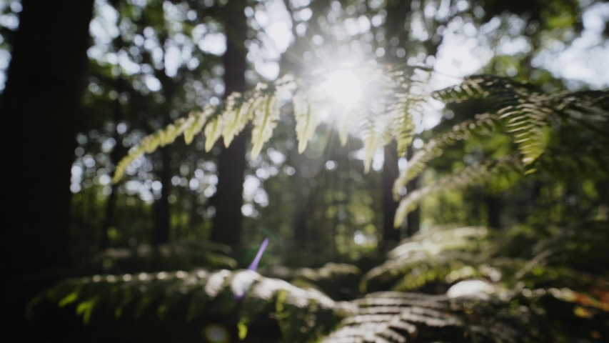 The branch and leaves of a fern moving through bright sunshine   Shutterstock HD Video #1055359190
