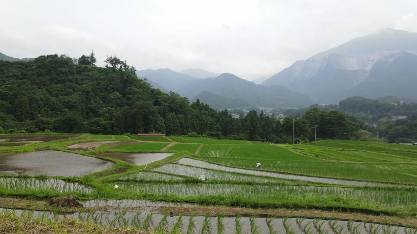 Japan Terasaka Rice terraces drone up | Shutterstock HD Video #1055359421