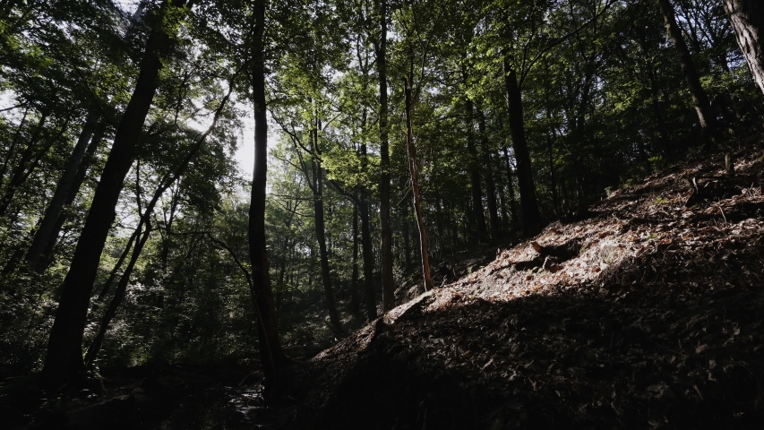 Forest scene with light pools and shadows on a hill   Shutterstock HD Video #1055359559