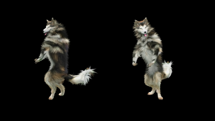 Dogs Dance 3d rendering. Animation Loop,  composition 3d mapping cartoon, Included in the end of the clip With Alpha matte.   Shutterstock HD Video #1055359610