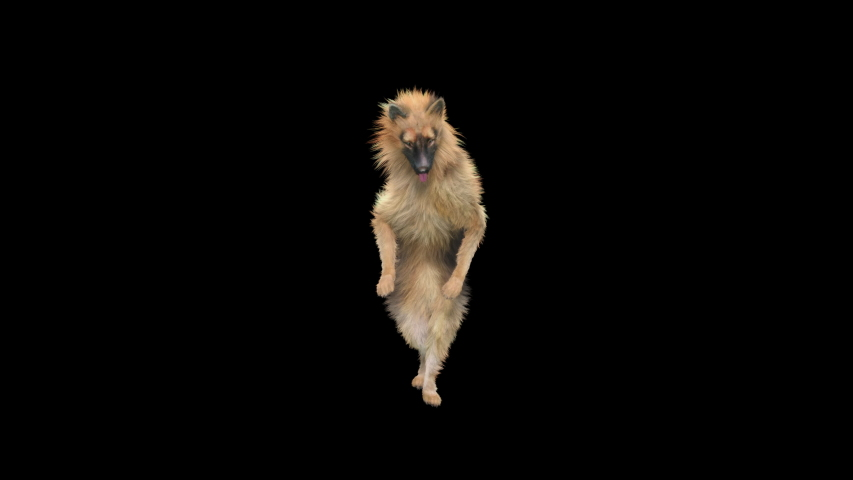 Dogs Dance 3d rendering. Animation Loop,  composition 3d mapping cartoon, Included in the end of the clip With Alpha matte. | Shutterstock HD Video #1055368958