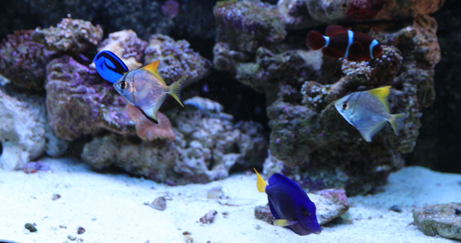 Exotic fishes and beautiful coral in deep aquarium. High quality 4k footage | Shutterstock HD Video #1055368991