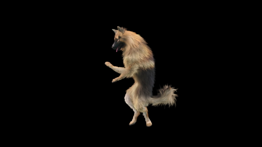 Dogs Dance 3d rendering. Animation Loop,  composition 3d mapping cartoon, Included in the end of the clip With Alpha matte. | Shutterstock HD Video #1055369957