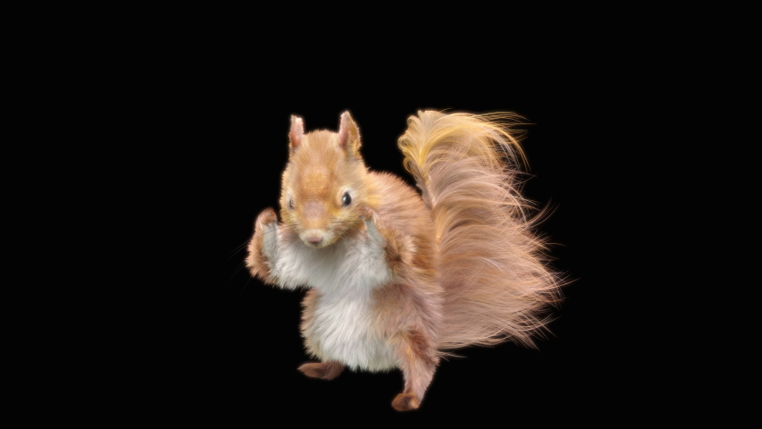 Squirrel Dance CG fur, 3d rendering, animal realistic CGI VFX, Animation Loop, composition 3d mapping cartoon, Included in the end of the clip with Alpha matte.
